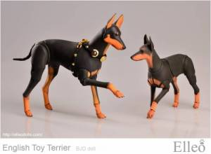 English_Toy_Terrier_98