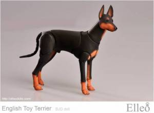 English_Toy_Terrier_99
