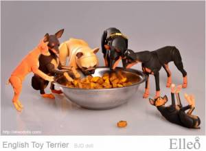 English_Toy_Terrier_94