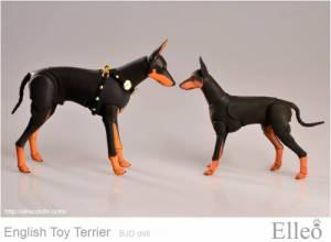 English_Toy_Terrier_96
