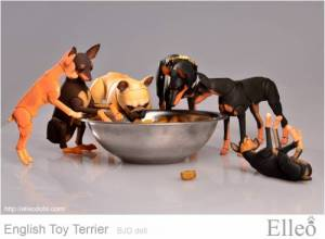 English_Toy_Terrier_95