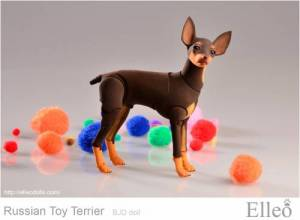 Russian_Toy_Terrier_87