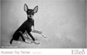 Russian_Toy_Terrier_65