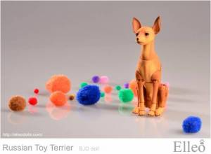 Russian_Toy_Terrier_86