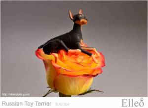Russian_Toy_Terrier_97