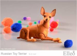 Russian_Toy_Terrier_85