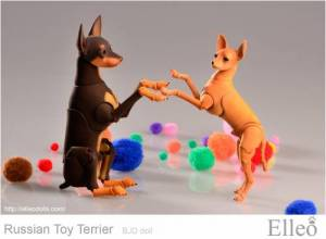 Russian_Toy_Terrier_83