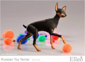Russian_Toy_Terrier_84