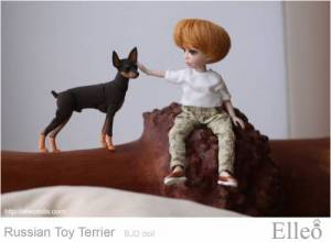 Russian_Toy_Terrier_78