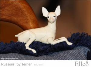 Russian_Toy_Terrier_68