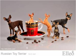 Russian_Toy_Terrier_89