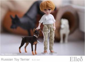 Russian_Toy_Terrier_77