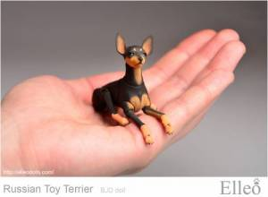 Russian_Toy_Terrier_95
