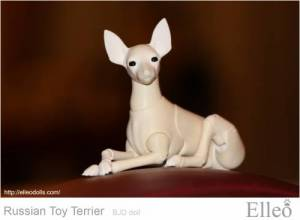 Russian_Toy_Terrier_75