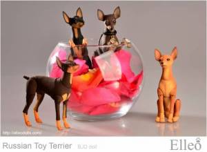Russian_Toy_Terrier_93