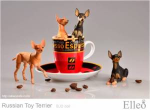 Russian_Toy_Terrier_91