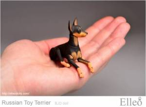 Russian_Toy_Terrier_96