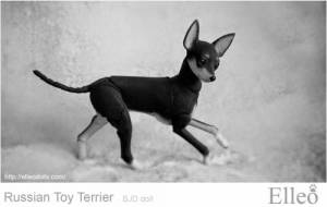 Russian_Toy_Terrier_64
