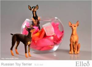Russian_Toy_Terrier_94