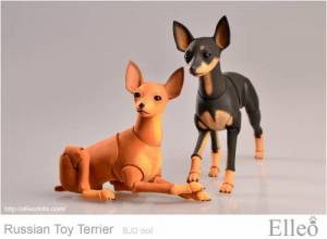 Russian_Toy_Terrier_82