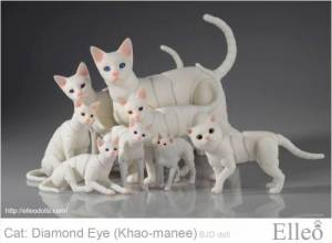 khao-manee_cat_bjd_93