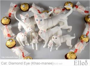 khao-manee_cat_bjd_91