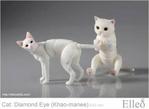 khao-manee_cat_bjd_87