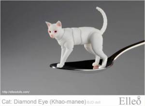 khao-manee_cat_bjd_86