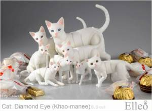 khao-manee_cat_bjd_92
