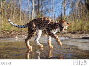 ocelot_wild_doll_cat_07