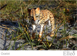ocelot_wild_doll_cat_03