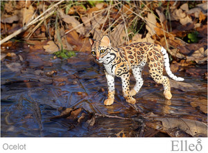 ocelot_wild_doll_cat_14