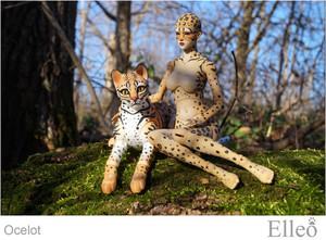 ocelot_wild_doll_cat_02