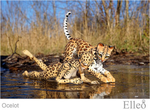 ocelot_wild_doll_cat_04